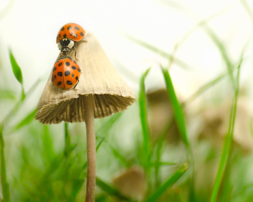 ladybug kiss