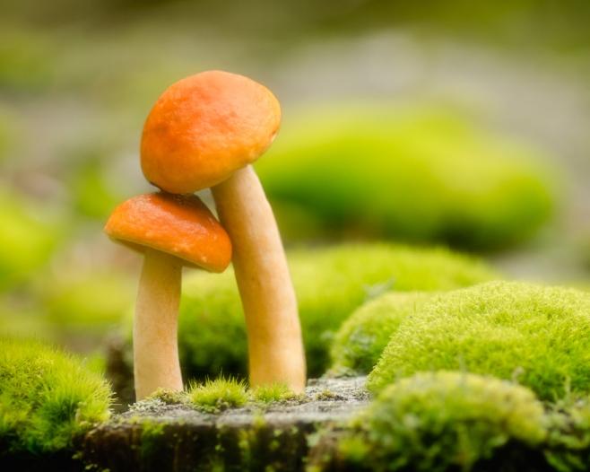 mushroom love