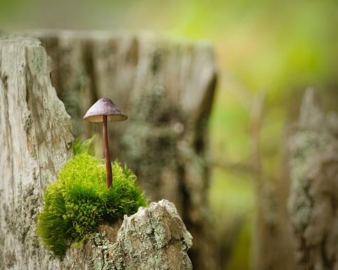 mushroom perch
