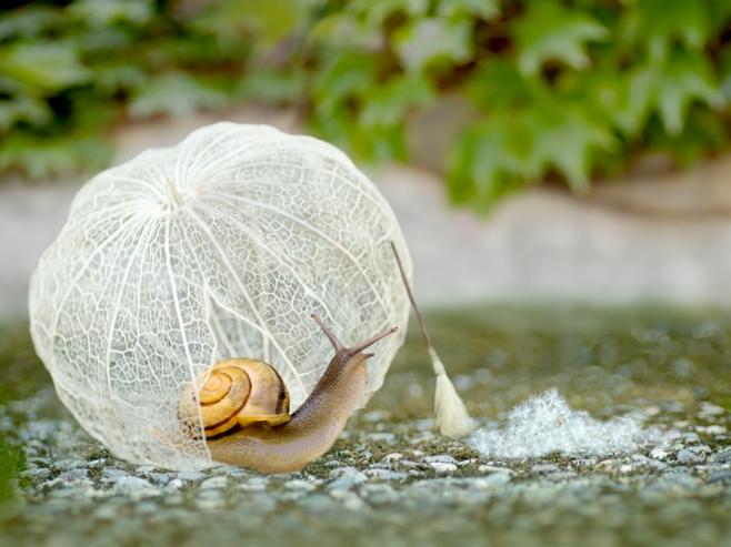 snail housework