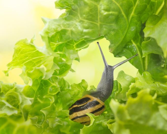 snail's breakfast