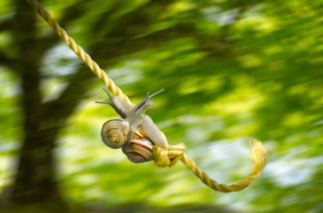 swinging snails