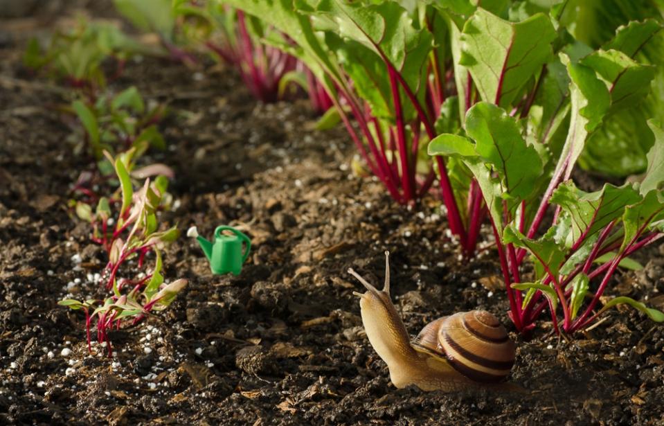 snail's garden