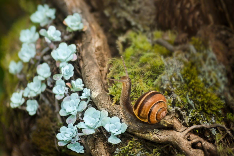 snail's succulents