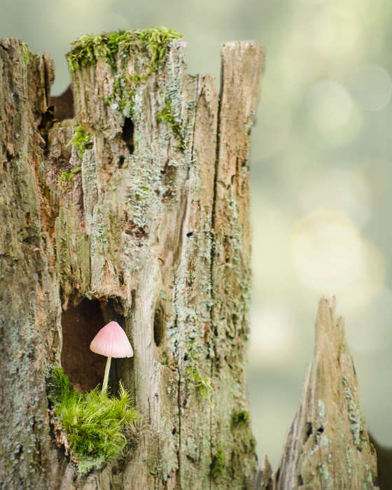 the mushroom princess